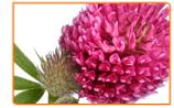 3 Essential Herbs to Help You Sleep During Menopause