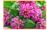 5 Myths About Herbal Remedies for Menopause Symptoms