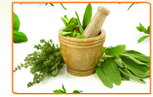 Best Places to Find Herbs for Menopause
