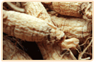 ginseng siberian