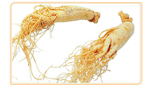 wild ginseng