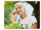 Healing Herbs For Menopause