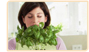 Natural Herbs for Menopause