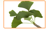 How will Ginkgo Biloba Affect My Hormone Levels during Menopause?