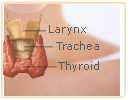 macafem thyroid