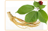 ginseng herb