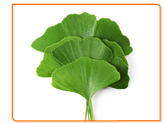 The Risks of Taking Ginkgo Biloba during Menopause
