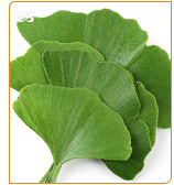 Ginkgo biloba is a good alternative to fight the menopause symptoms