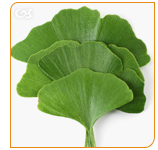 Ginkgo Biloba is an ancient remedy to mental performance and concentration
