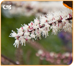 Black cohosh have isoflavones who help to relieve menopause symptoms.