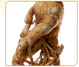 Ginseng has been used like medicine for three thousand years