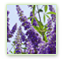 Vitex