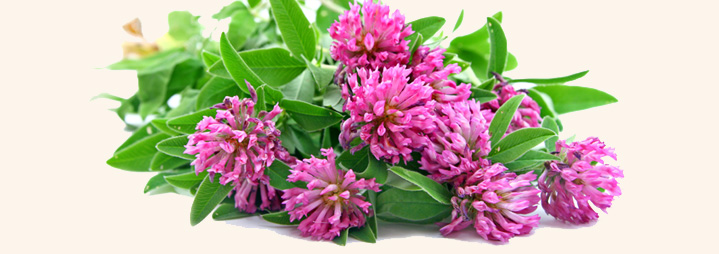 Image result for herbs for menopause