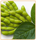 Phytoestrogens are plant compounds who can mimic the estrogens functions