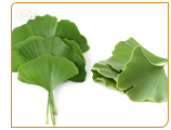 Ginkgo Biloba promotes the health of blood and combats mental fatigue