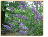 vitex-naturally