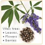 vitex-parts