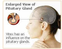 vitex-pituitary