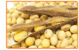 What Are the Different Types of Phytoestrogens
