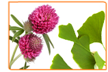 What Are the Most Common Herbs Used to Treat Menopause?