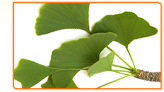 What is the Right Amount of Ginkgo Biloba to Help with My Menopause Symptoms?